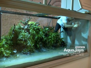 aquajayaancol201308-aquajaya--ancol-marinara-portfolio-aquajaya