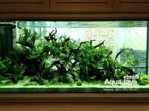 Aquajaya – Ancol Marinara