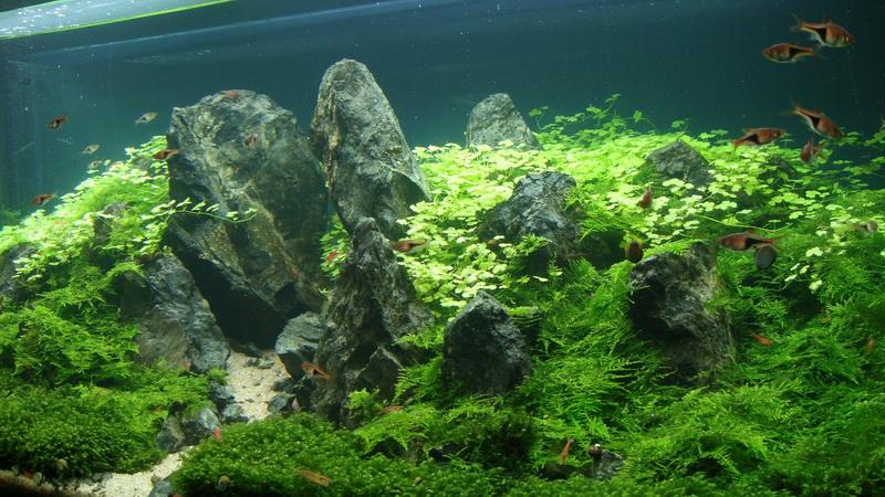 papandayan-2011-8211-ajhq-portfolio-aquajaya-aquajaya