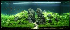 Aquajaya – Papandayan