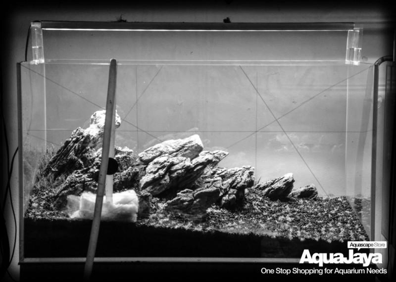 Cara Membuat Aquascape Style Iwagumi Aquajaya