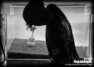 126719699500738151134374412420272907538017o-cara-membuat-aquascape-style-iwagumi-iwagumi-membuat-aquascape-aquajaya