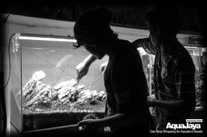12916239950074838446668926719300496626169o-cara-membuat-aquascape-style-iwagumi-iwagumi-membuat-aquascape-aquajaya