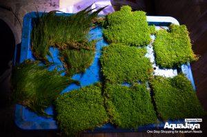 129167749500746851133502228406650206463963o-cara-membuat-aquascape-style-iwagumi-iwagumi-membuat-aquascape-aquajaya
