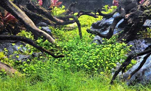 aquajaya-surabaya-cabang-aquajaya
