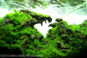 Top Ten Nano Aquascape AGA 2015