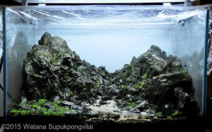 nano-aquarium--on-the-rock--watana-supukpongvilai-02-nano-aquarium--on-the-rock--watana-supukpongvilai-nano-aquascape-aquajaya