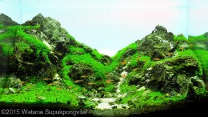 nano-aquarium--on-the-rock--watana-supukpongvilai-nano-aquarium--on-the-rock--watana-supukpongvilai-nano-aquascape-aquajaya