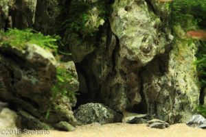 nano-aquascape--estuary--soeharto-02-nano-aquascape--estuary--soeharto-nano-aquascape-aquajaya