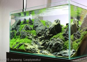 Nano Aquascape – Unconditional Love – Jirawong Laopiyasakul