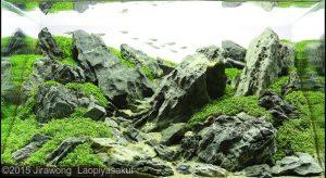 nano-aquascape--unconditional-love--jirawong-laopiyasakul-top-ten-nano-aquascape-aga-2015-nano-aquascape-aquajaya