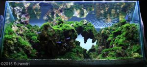 to-freedom--suhendri-02-to-freedom--suhendri-medium-aquarium-aquajaya