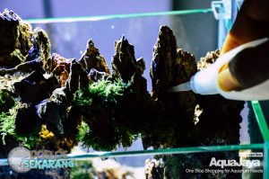 cara-membuat-aquascape-09-cara-membuat-aquascape--step-by-step-membuat-aquascape-aquajaya