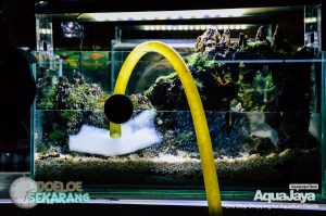 cara-membuat-aquascape-11-cara-membuat-aquascape--step-by-step-membuat-aquascape-aquajaya