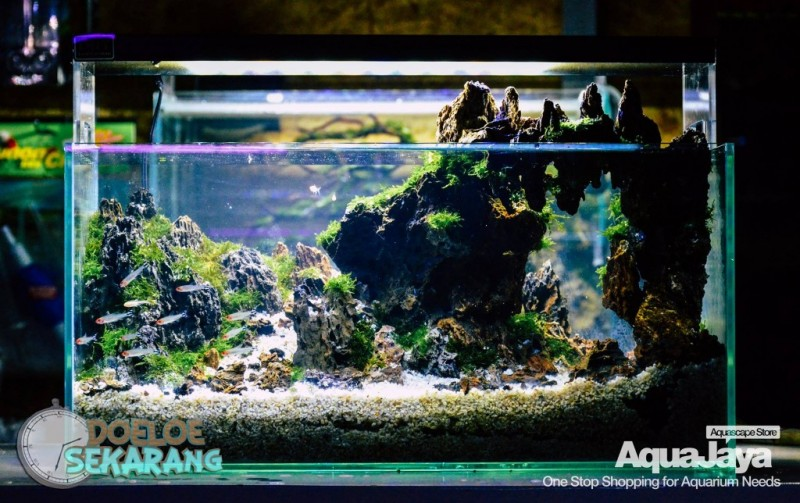 Cara Membuat Aquascape Step By Step Aquajaya