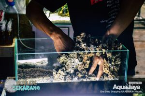 cara-membuat-aquascape-13-cara-membuat-aquascape--step-by-step-membuat-aquascape-aquajaya