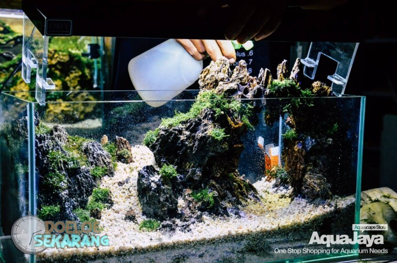 Cara Membuat Aquascape Step By Step Aquajaya