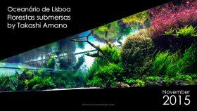 florestas-submersas-01-florestas-submersas--40-meter-nature-aquarium-aquascape-raksasa-aquajaya