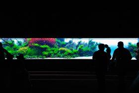 florestas-submersas-04-florestas-submersas--40-meter-nature-aquarium-aquascape-raksasa-aquajaya