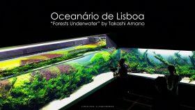 florestas-submersas-05-florestas-submersas--40-meter-nature-aquarium-aquascape-raksasa-aquajaya