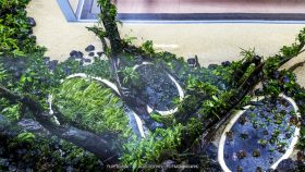 florestas-submersas-07-florestas-submersas--40-meter-nature-aquarium-aquascape-raksasa-aquajaya