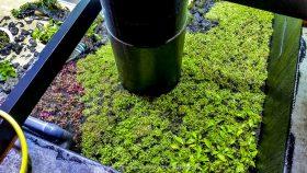 florestas-submersas-09-florestas-submersas--40-meter-nature-aquarium-aquascape-raksasa-aquajaya