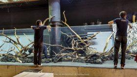 florestas-submersas-10-florestas-submersas--40-meter-nature-aquarium-aquascape-raksasa-aquajaya