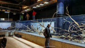 florestas-submersas-11-florestas-submersas--40-meter-nature-aquarium-aquascape-raksasa-aquajaya