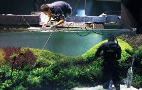 florestas-submersas-18-florestas-submersas--40-meter-nature-aquarium-aquascape-raksasa-aquajaya