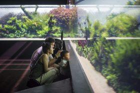 florestas-submersas-19-florestas-submersas--40-meter-nature-aquarium-aquascape-raksasa-aquajaya