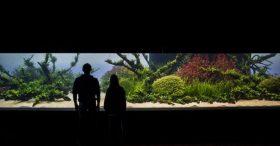 florestas-submersas-20-florestas-submersas--40-meter-nature-aquarium-aquascape-raksasa-aquajaya
