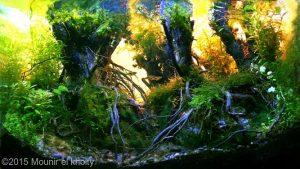 mongrove-forest-top-ten-nano-aquascape-aga-2015-nano-aquascape-aquajaya
