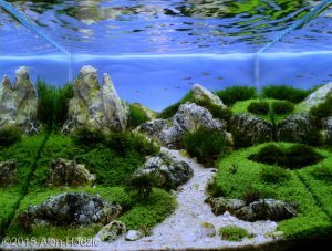 nano-velebit-top-ten-nano-aquascape-aga-2015-nano-aquascape-aquajaya