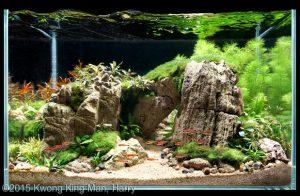the-rock-top-ten-nano-aquascape-aga-2015-nano-aquascape-aquajaya