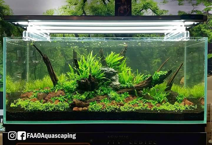 live-aquascaping-cips-exhibition-guangzhou-gallery-aquascape-aquajaya