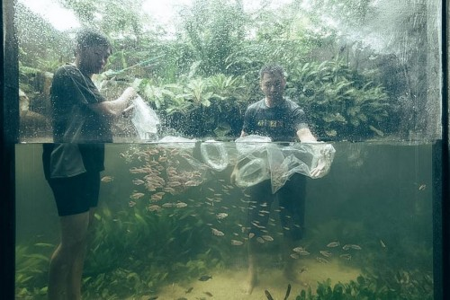 sunken-garden-by-green-chapter-gallery-aquascape-aquajaya