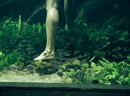 Sunken Garden by Green Chapter