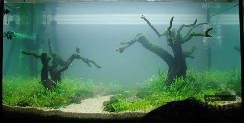 rempoa-2010-8211-ajhq-portfolio-aquajaya-aquajaya