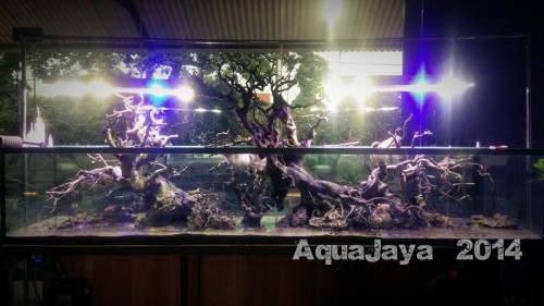 main-display-2014-8211-ajhq-portfolio-aquajaya-aquajaya