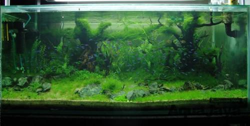 jaksel-2011-8211-ajhq-gallery-aquascape-aquajaya